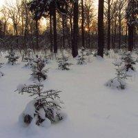 Зимний вечер в парке :: Андрей Лукьянов