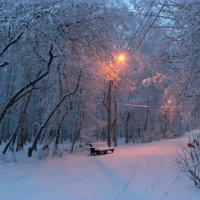 Утро в парке :: Мария Кухта