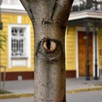 Всевидящее око. :: Стас