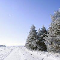 зимняя дорога :: татьяна