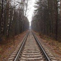 Путь сквозь лес :: Григорий