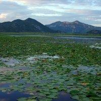 Черногория Скадарское озеро :: Андрей Криштопенко