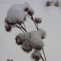 Мороз ему не страшен :: Андрей Лукьянов