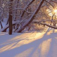 Застенчивое солнце улыбнулось из-за заснеженных ветвей... :: Елена Ярова