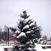 Елочка зимой :: Елена Семигина