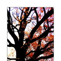 Последняя осень... :: AWARA