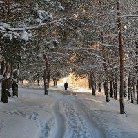В золоте зимнего солнца :: Николай Белавин