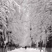 В зимнем парке :: Владислав Филипенко