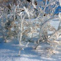 В снежном одеянии :: Юрий Стародубцев