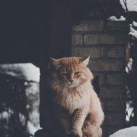 Тяжело быть котом.. :: Максим Владимирович