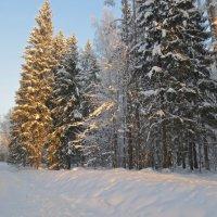красавица-зима :: Елена