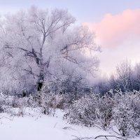Морозное утро :: Михаил Бабаков