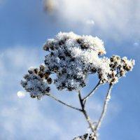 зима :: Tiana Ros