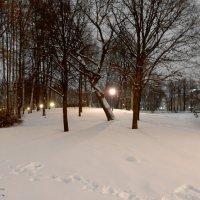 Снежное покрывало :: Елена Гуляева (mashagulena)