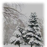 Снежный реверанс... :: Tatiana Markova