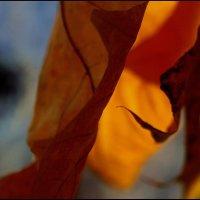 Осенний  лист. :: Валерия  Полещикова
