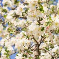Весенний сад :: Оксана Романова