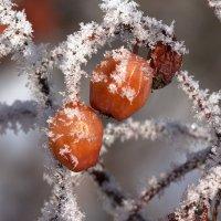 Зимняя шуба :: Апёнова Нина