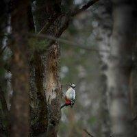 Лесной красавец :: Валерий Гришин