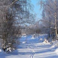 Зимний день :: Paparazzi
