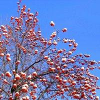 Красно-белое на голубом . :: Мила Бовкун