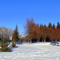 В один из солнечных дней в Сибири . :: Мила Бовкун