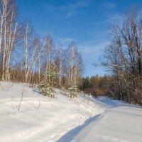 Зима в лесу :: Любовь Потеряхина