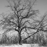 Дерево :: Tina Valentime