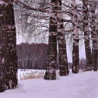 Зимушка-зима :: Татьяна Ломтева
