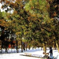 Парковый пейзаж ( 2 ) :: Людмила