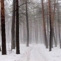 Зимы весенние туманы... :: Лесо-Вед (Баранов)