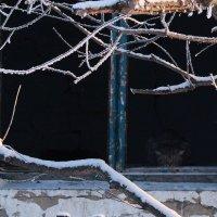 Душа брошенного дома :: Екатерина