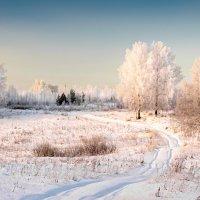 В зимнем наряде :: Владимир Чуприков