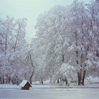Красота зимы :: Марина Кит