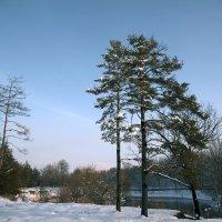 К нам заглянула зима :: Александр Грищенко