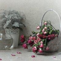 Зимние розы... :: Татьяна Ким
