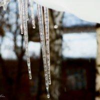 Потеплело в январе! :: °•●Елена●•° Аникина♀
