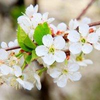 Весна :: Ольга Чирятникова