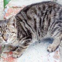 Уличный кот :: Анна Елтышева