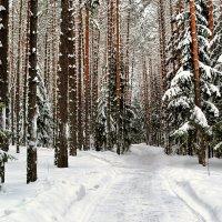 Январь в сосновом бору :: Милешкин Владимир Алексеевич