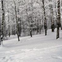Смоленщина в январе 2016 :: Милешкин Владимир Алексеевич