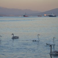 Лебединое море :: Елена