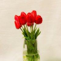 Тюльпаны :: Оксана Романова
