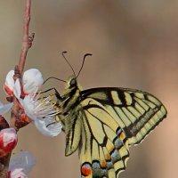 Бабочка :: Андрей Козлов