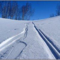 На лыжных прогулках :: Андрей Заломленков