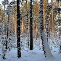 В зимнем лесу :: Вера Андреева