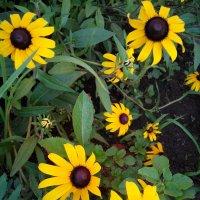 июль, цветы :: Nadezhda