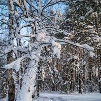 Снег, снег и ещё раз снег :: Андрей Дворников