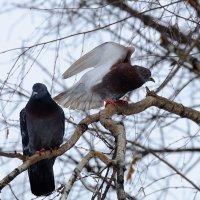 Птица мира :: Алексей Афанасьев