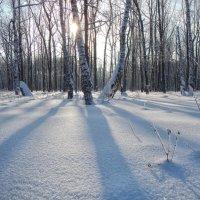 зимний день :: Александр Беляков